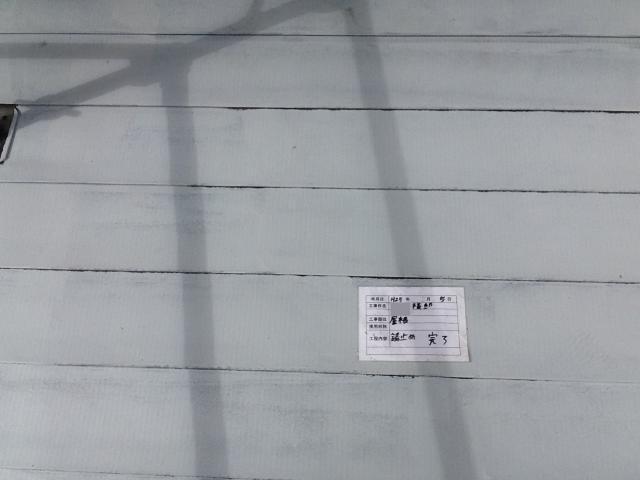 20131009Msamatei18.JPG