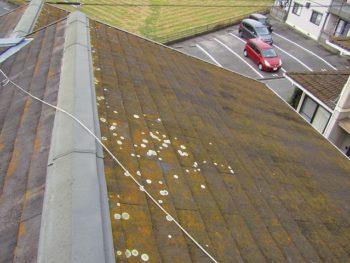 屋根の塗装前 苔が多く発生