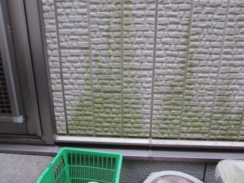 外壁は苔や藻が多い