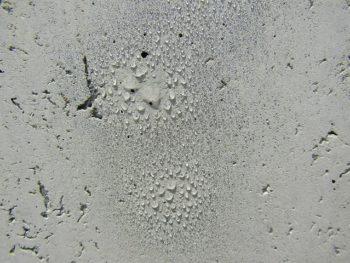 コンクリートの撥水性を確かめた