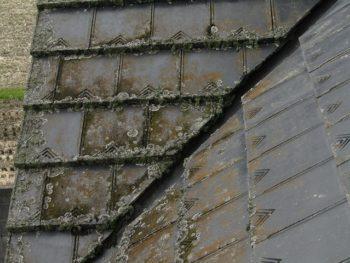 屋根に苔や藻が生える