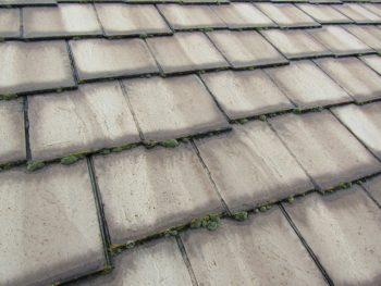 苔が多く生えた屋根